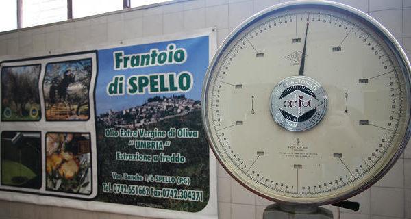 umbria-frantoio-spello3